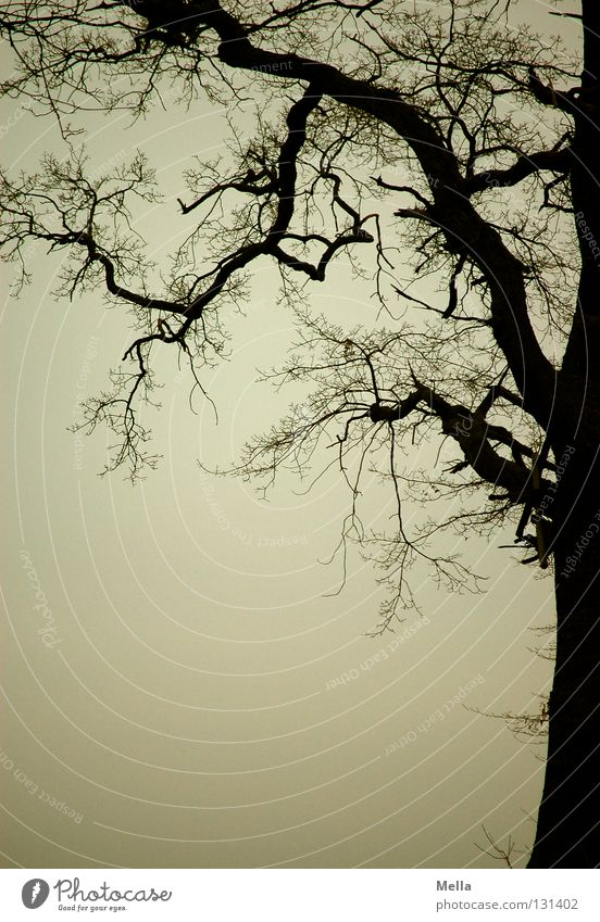 my friend, the tree Tree Branchage Branched Silhouette Dreary Gray Gloomy Eerie Mystic Dark Creepy Frame Fine Thin Fat Oak tree Edge of the forest Sky Twig