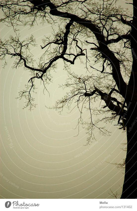 Sky Tree Dark Gray Free Gloomy Branch Thin Creepy Fat Tree trunk Twig Frame Mystic Fine Eerie