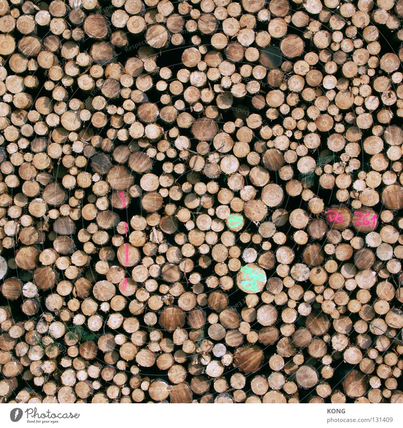 Tree Wood Circle End Tree trunk Material Stack Storage Forestry Shift work Saw Logging Woodcutter