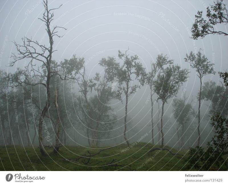 Tree Autumn Rain Landscape Hiking Fog Grief Distress Mystic Norway Eerie Birch tree