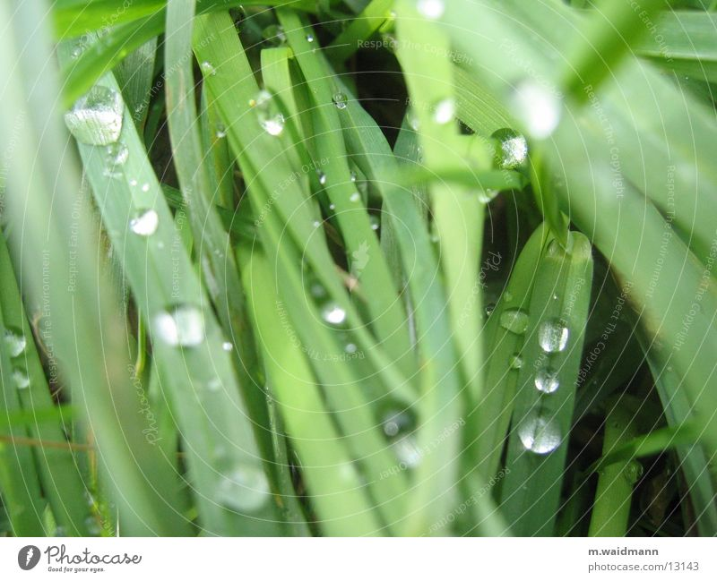 Water Green Grass Rain Drops of water Blade of grass