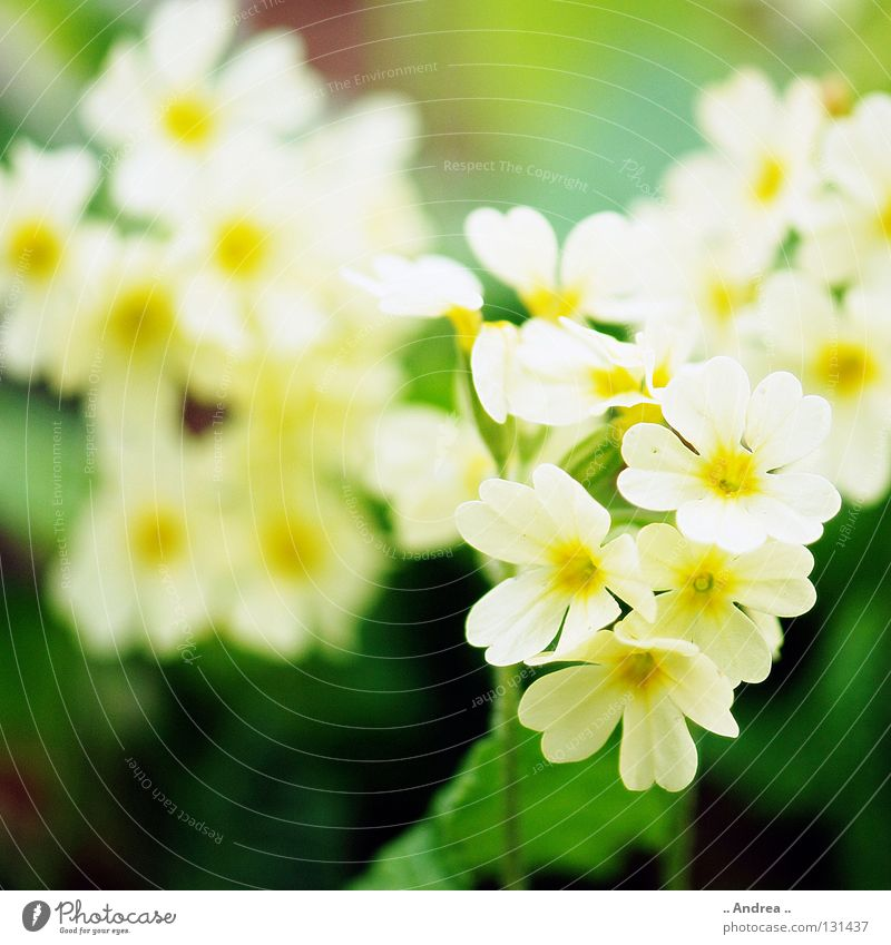 Spring messenger no. 2 Plant Flower Blossom Blossoming Friendliness Happiness Beautiful Yellow Green Orange White Joie de vivre (Vitality) Contentment Fragrance