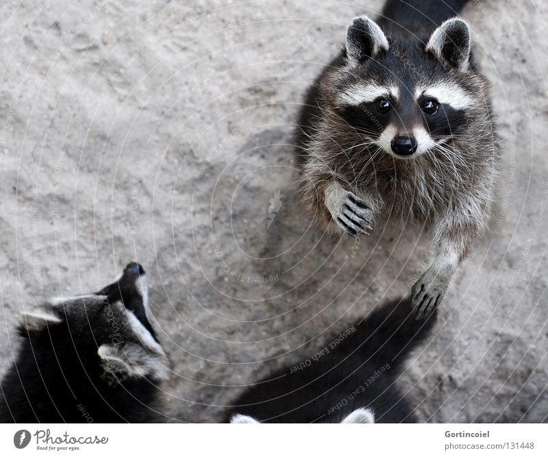 White Black Eyes Animal Gray Sand Bear Group of animals Ear Animal face Observe Pelt Zoo Curiosity Wild animal Cute