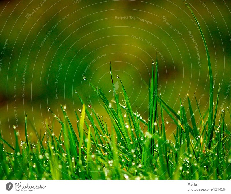 Nature Green Water Relaxation Calm Meadow Grass Above Rain Park Fresh Earth Perspective Drops of water Point Wet