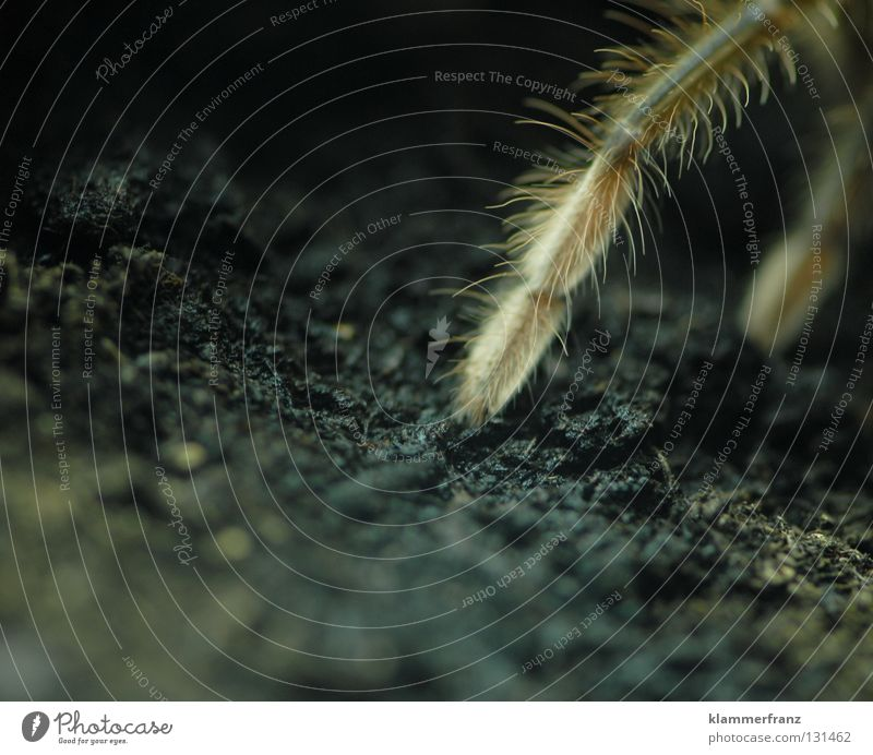 Animal Legs Earth Thin Living thing Spider Partially visible Section of image Terrarium Spider legs Bird-eating spider