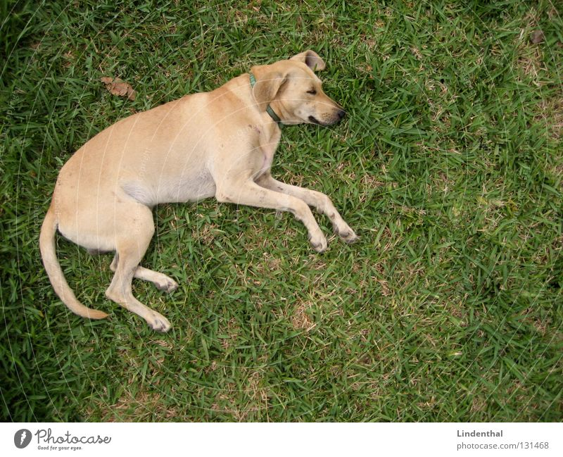 Schnuffel while chilling Dog Pelt Grating Fence Wire netting Concrete Concrete floor Bird's-eye view Sleep Logo Puma Dimension Relaxation Jump Mammal snuff