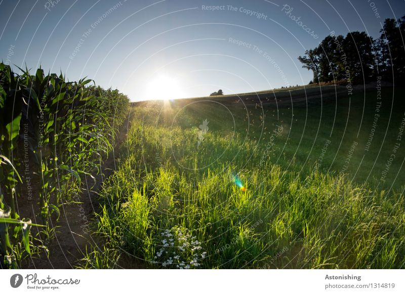 sunbathed Environment Nature Landscape Plant Air Sky Cloudless sky Horizon Sun Sunrise Sunset Sunlight Summer Weather Beautiful weather Warmth Tree Flower Grass