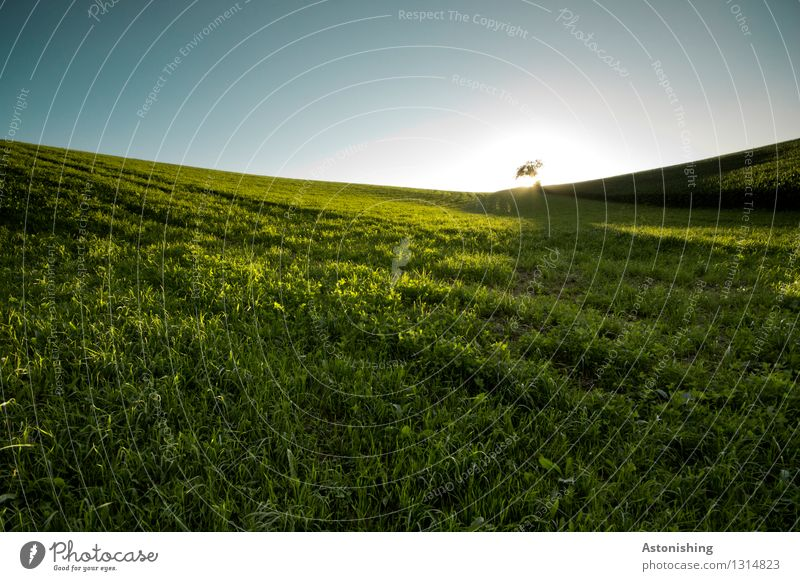 Sky Nature Plant Blue Green Summer Sun Tree Loneliness Landscape Dark Environment Yellow Warmth Meadow Grass