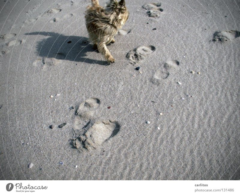 beach groove Beach Dog Romp Laws and Regulations Love of animals Free-roaming Vacation & Travel Ocean Sylt Joint Relaxation Energy Air Waves Dream Mammal Coast