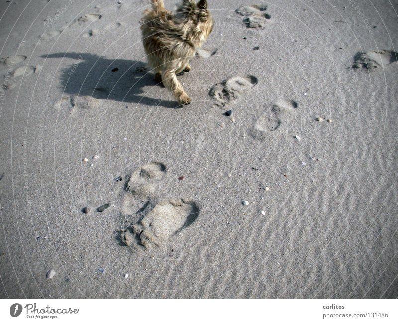 Ocean Joy Beach Vacation & Travel Snow Relaxation Dream Dog Sand Air Waves Coast Walking Energy Free Running