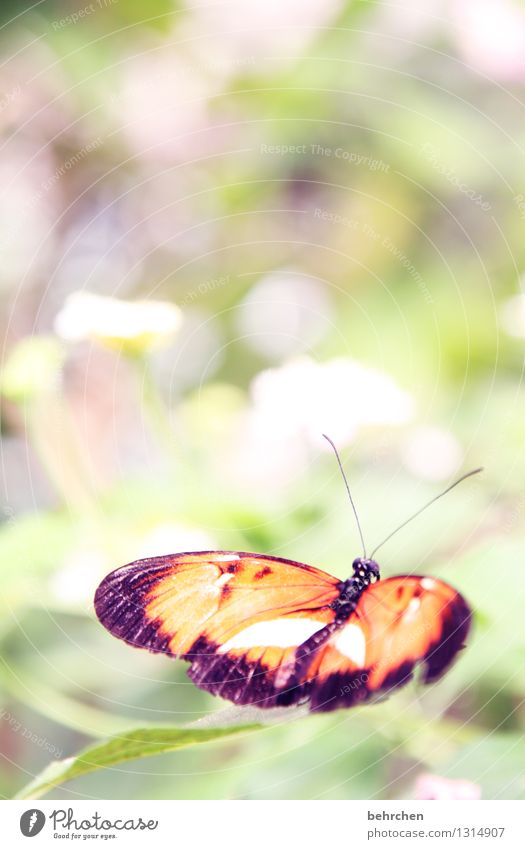 lightness Nature Plant Animal Spring Summer Beautiful weather Tree Flower Leaf Blossom Garden Park Meadow Wild animal Butterfly Wing 1 Observe Relaxation Flying