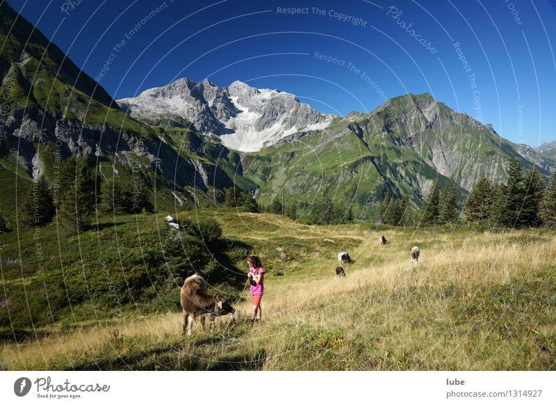 Child Nature Summer Landscape Girl Mountain Environment Rock Contentment Idyll Infancy Climate Group of animals Beautiful weather Peak Agriculture