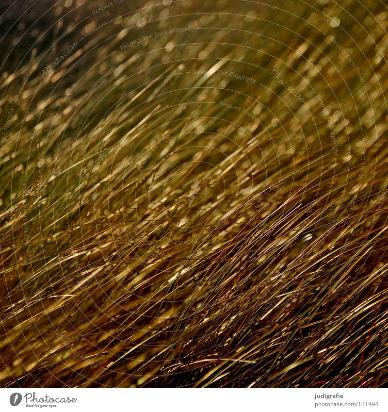 Nature Beautiful Beach Ocean Colour Meadow Grass Coast Line Glittering Gold Growth Beach dune Direction Evening sun