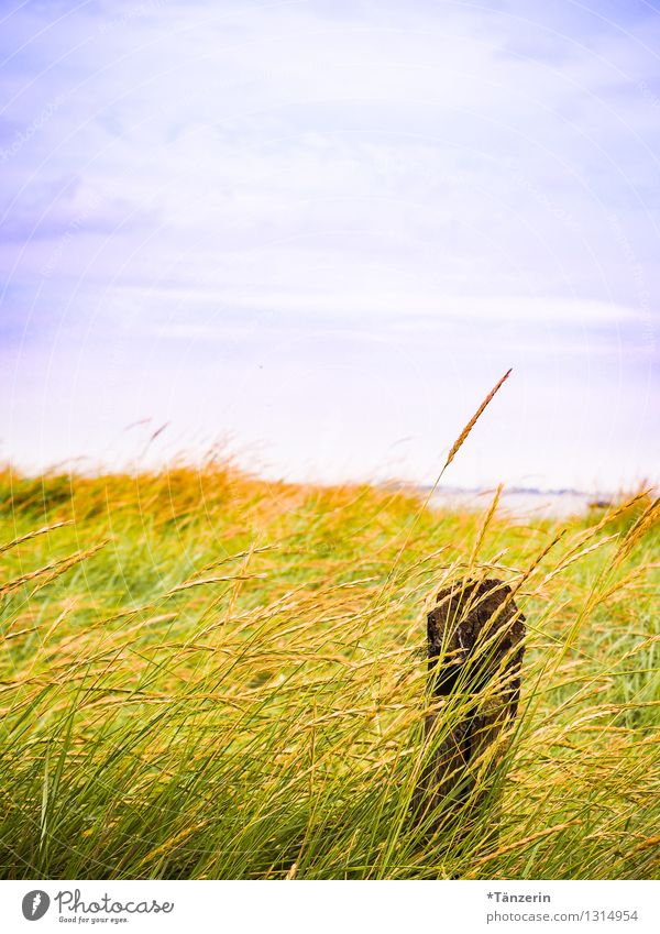 Sky Nature Vacation & Travel Blue Plant Summer Relaxation Ocean Landscape Calm Far-off places Beach Life Grass Coast Freedom
