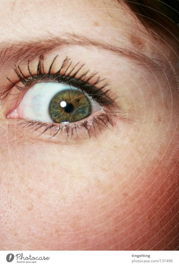 Woman Green Eyes Emotions Brown Crazy Near Cheek Eyelash Eyebrow Pupil Rouge Iris Tear open