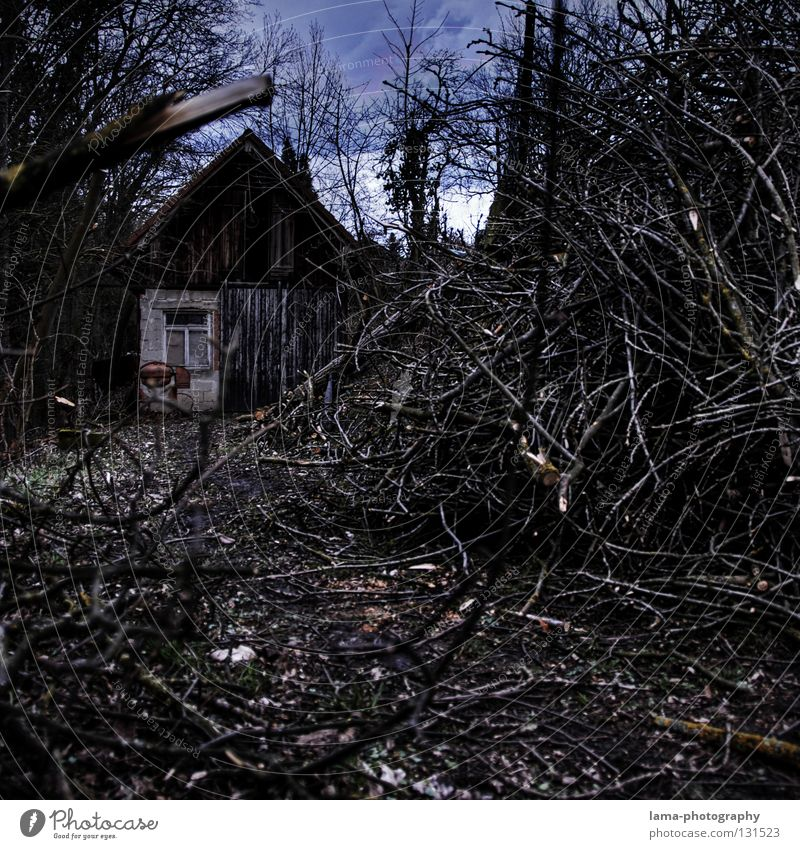 Woodcutter's Home House (Residential Structure) Wooden house Saw mill Tree Forest Cut down Firewood Leaf Undergrowth Logging Agitated Dark Eerie Fairy tale