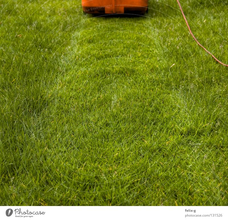 razor Lawnmower Electricity Green Red Grass surface Meadow Flower Garden Park Mow the lawn Cable Contrast Stopper Plant