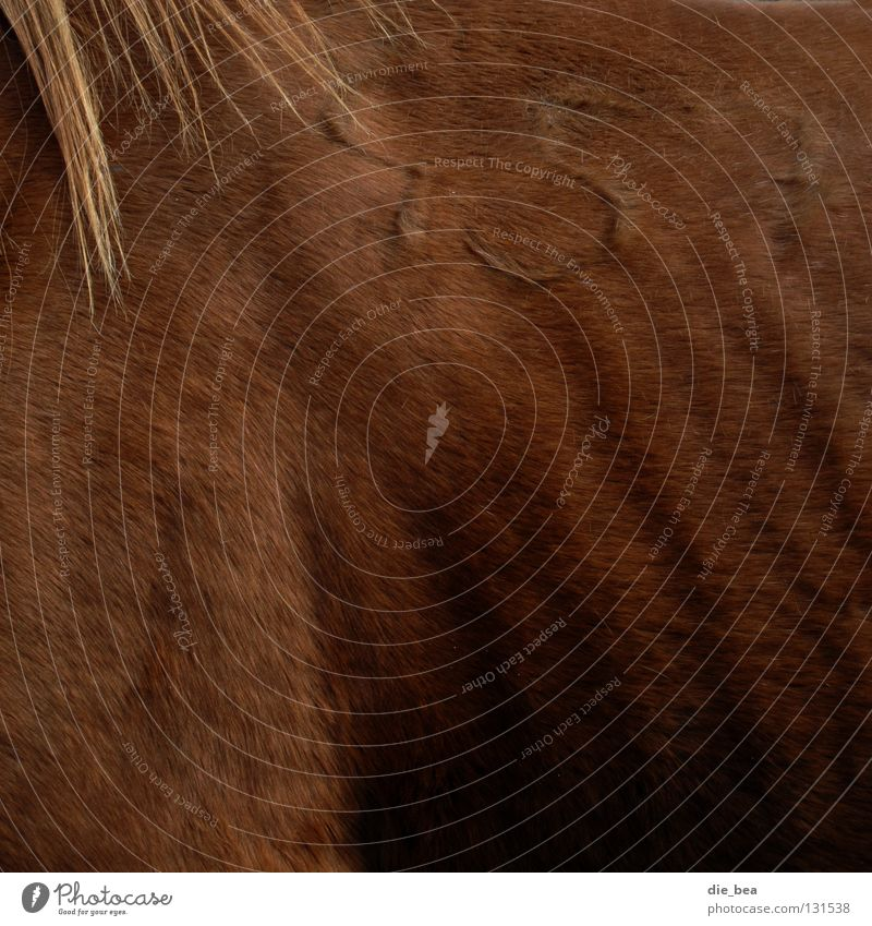 Old Hair and hairstyles Horse Digits and numbers Pelt Sign Shoulder Mammal Ribs Mane