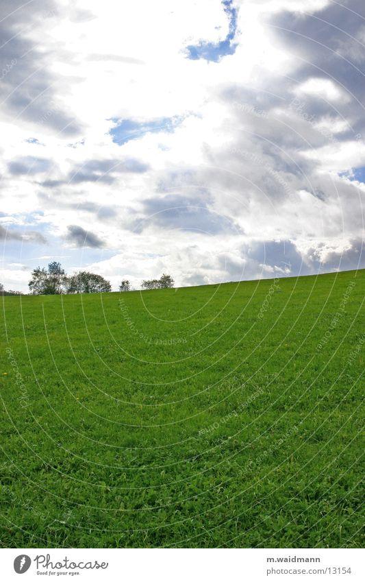 Sky Tree Green Clouds Meadow Grass Mountain Field