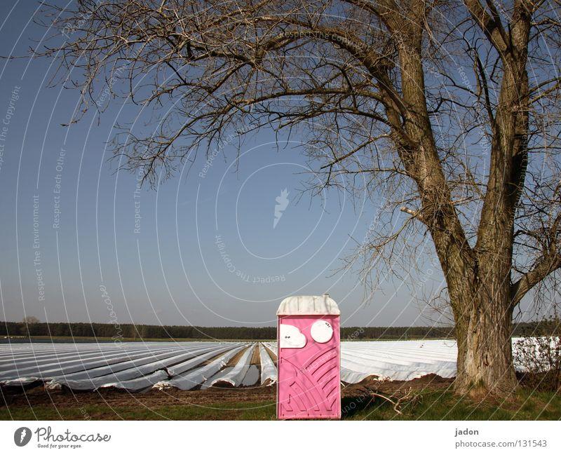 Tree Field Pink Agriculture Agriculture Brandenburg Rental toilet Asparagus field