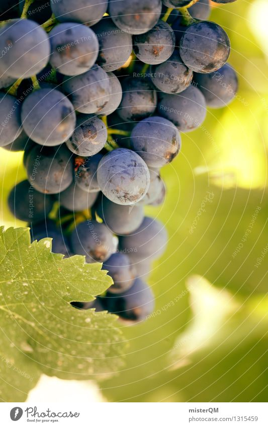 Wine blue. Nature Esthetic Vine Vineyard Wine growing Bunch of grapes Grape harvest Vine leaf Winery Red wine Mature Fruit Delicious Green Blue Colour photo