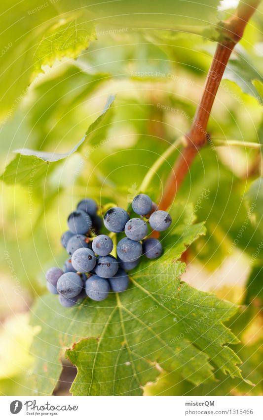 Precocious. Art Esthetic Vine Vineyard Wine growing Bunch of grapes Grape harvest Vine leaf Winery Delicious Fruit Berries Blue Green Colour photo