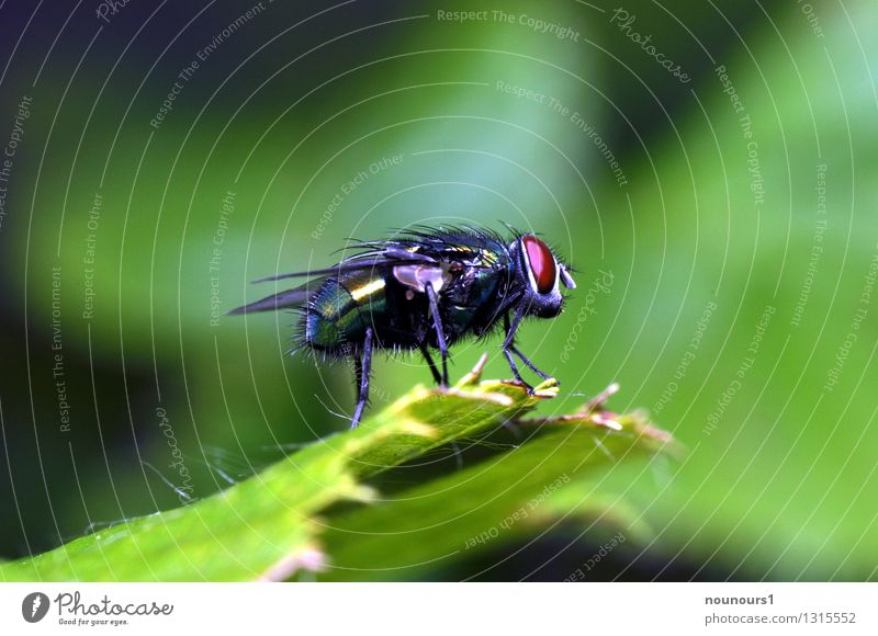 Plant Animal Wild animal Fly Insect