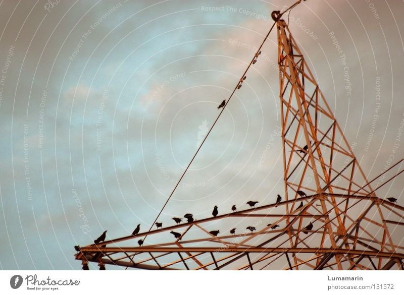 Sky Clouds Bird Metal Industry Energy industry Electricity Future Cable Electricity pylon Construction Transmission lines Assembly Crow Energy crisis