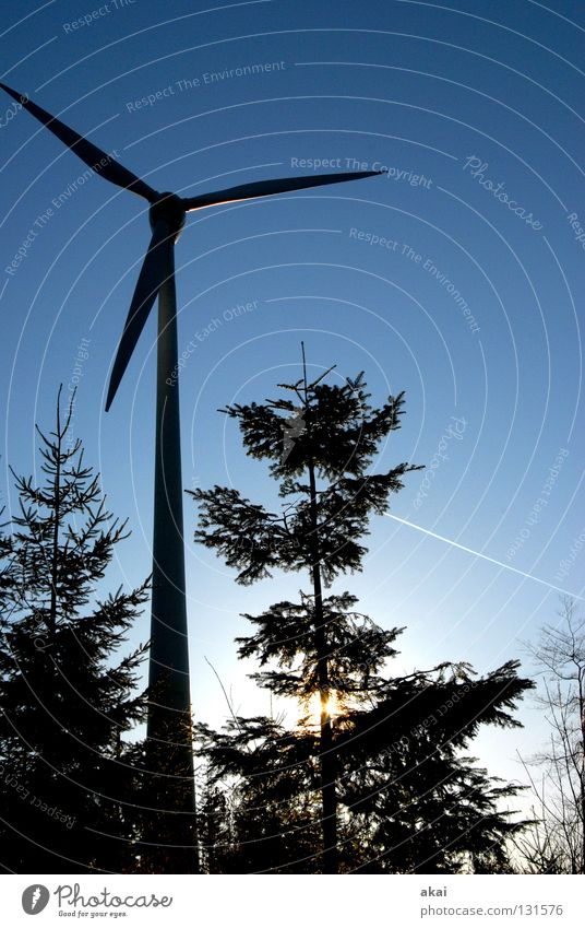 natural power Sky Coniferous trees Forest Sky blue Geometry Deciduous tree Perspective Coniferous forest Glade Paradise Clearing Wind energy plant Electricity