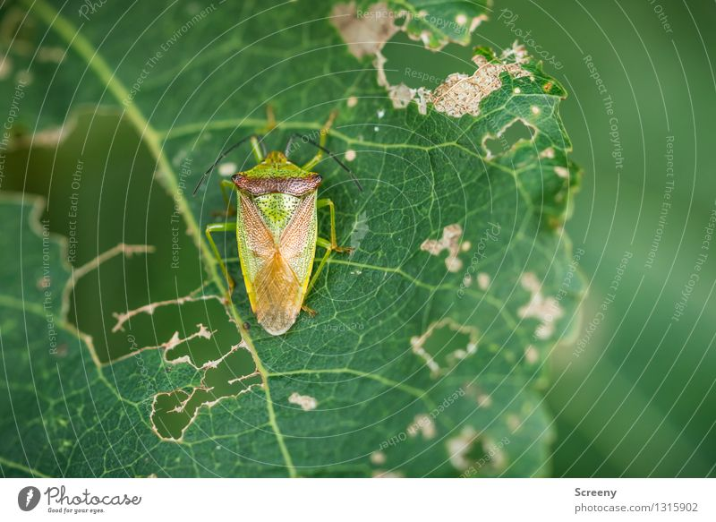 Nature Plant Green Summer Leaf Animal Forest Eating Small Wild animal Transience Destruction Beetle Voracious Consumed