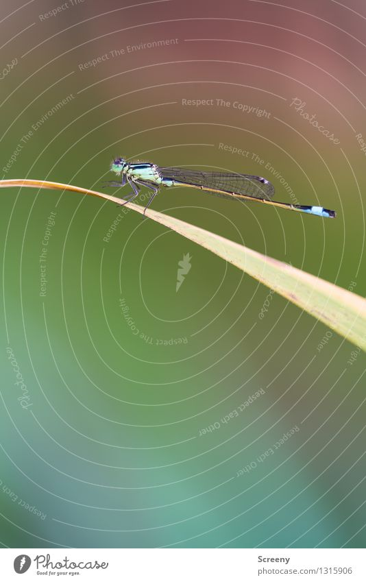 Filigree wing system #4 Nature Plant Animal Summer Grass Meadow Wild animal Dragonfly 1 Sit Esthetic Small Serene Calm Fragile Insect Wing Elegant Colour photo