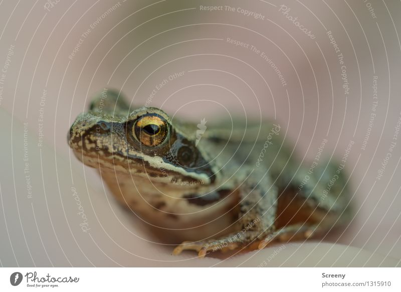 Nature Animal Eyes Meadow Happy Small Wild animal Sit Observe Wet Curiosity Smoothness Frog Self Control