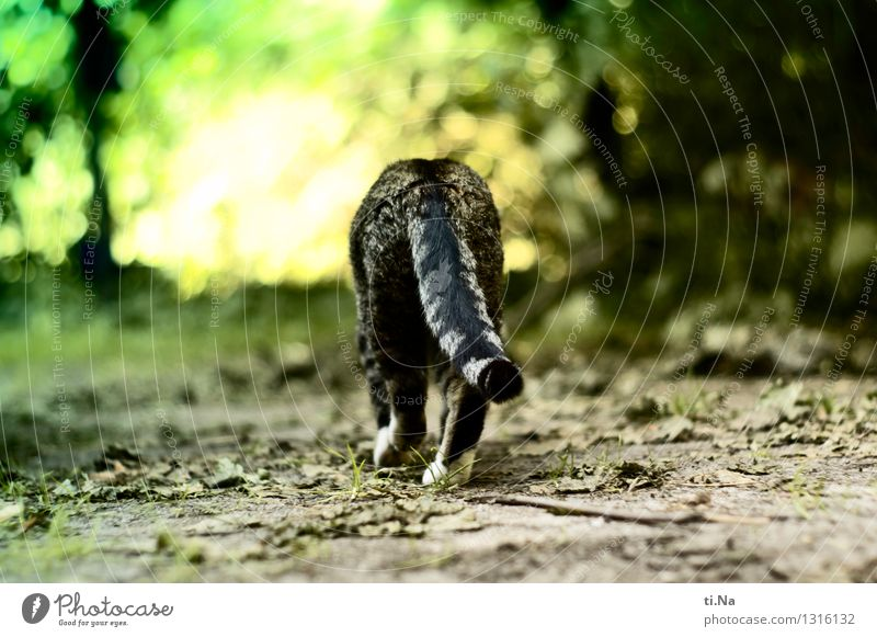 go your own way Summer Autumn Grass Bushes Leaf Garden Meadow Forest Pet Cat 1 Animal Discover Going Hiking Wild Green Self-confident Brave Calm Freedom
