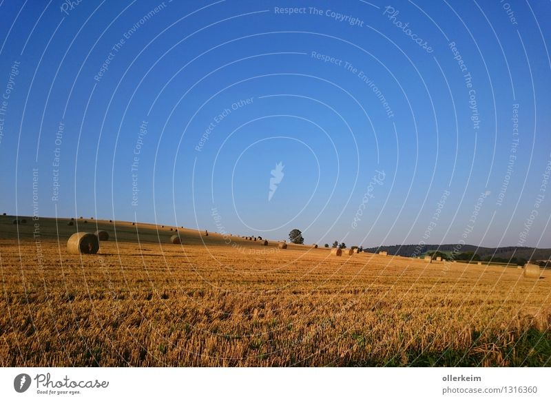 Field with straw bales - at sunrise Agriculture Forestry Environment Nature Landscape Earth Air Sky Cloudless sky Sunrise Sunset Moon Summer Autumn Weather