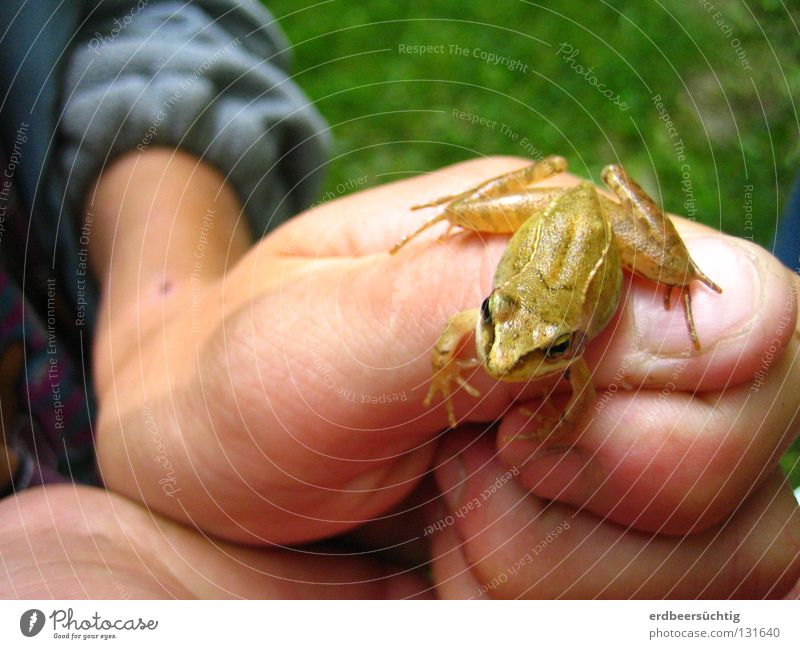 Kiss me! Playing Hiking Hand Fingers Air Grass Frog Jump Fresh Small Green Diminutive Thumb Thumbnail Hop To go for a walk Webbing Exterior shot Curiosity Child