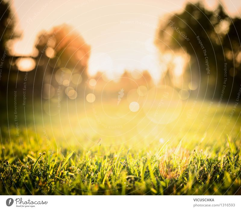 Beautiful lawn and sunset on nature background Design Summer Garden Nature Landscape Plant Sunrise Sunset Sunlight Autumn Beautiful weather Tree Grass Park