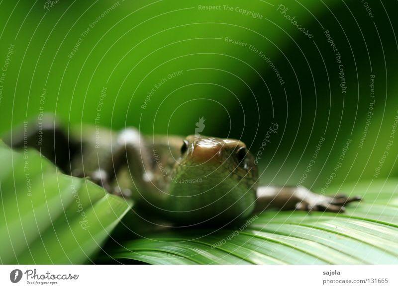 Green Animal Leaf Wild animal Asia Virgin forest Reptiles Frontal Saurians Lizards Botanical gardens
