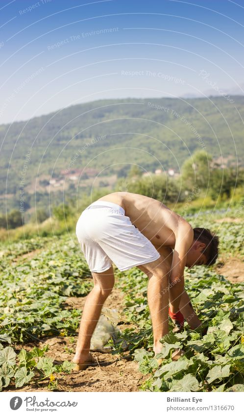 Human being Nature Youth (Young adults) Summer Hand Young man Warmth Lifestyle Work and employment Field Agriculture Vegetable Thin Athletic Farm Harvest