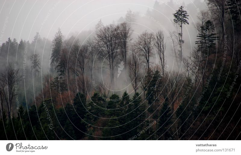 Fog of horror... Nature misty morning blackforest springtime trees dawn The Beauty
