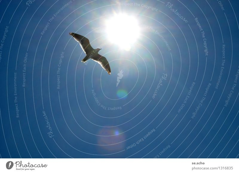 Free like a bird Animal Bird Wing 1 Movement Discover Flying Illuminate Vacation & Travel Simple Glittering Infinity Maritime Natural Above Positive Cliche Blue