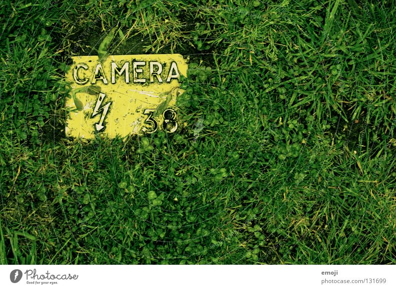 Green Yellow Grass Art Leisure and hobbies Photography Signs and labeling Wet 3 Fresh Characters Letters (alphabet) Digits and numbers Culture Image Lawn