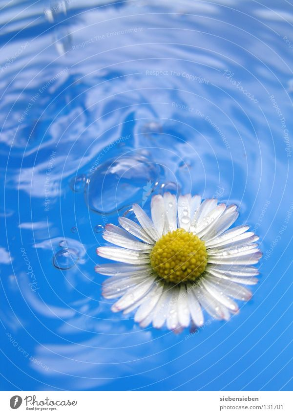 Nature Blue Water Beautiful Plant Summer Flower Joy Yellow Relaxation Environment Emotions Freedom Spring Happy Blossom