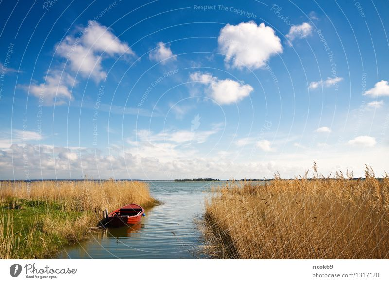 At the Bodden Vacation & Travel Nature Landscape Water Clouds Lake Watercraft Blue Yellow Red Romance Idyll Tourism Common Reed Body of water Sky