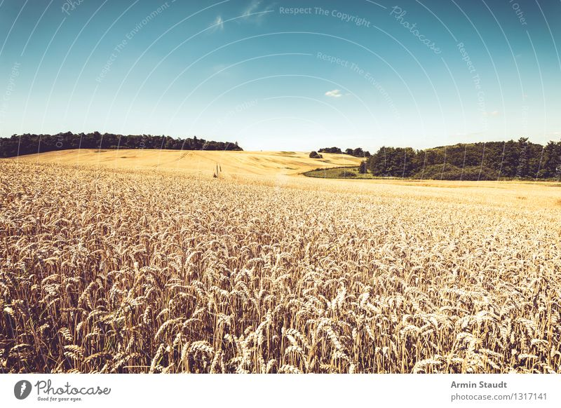 grain and such Food Grain Eating Luxury Healthy Eating Far-off places Summer Environment Landscape Cloudless sky Horizon Beautiful weather Plant