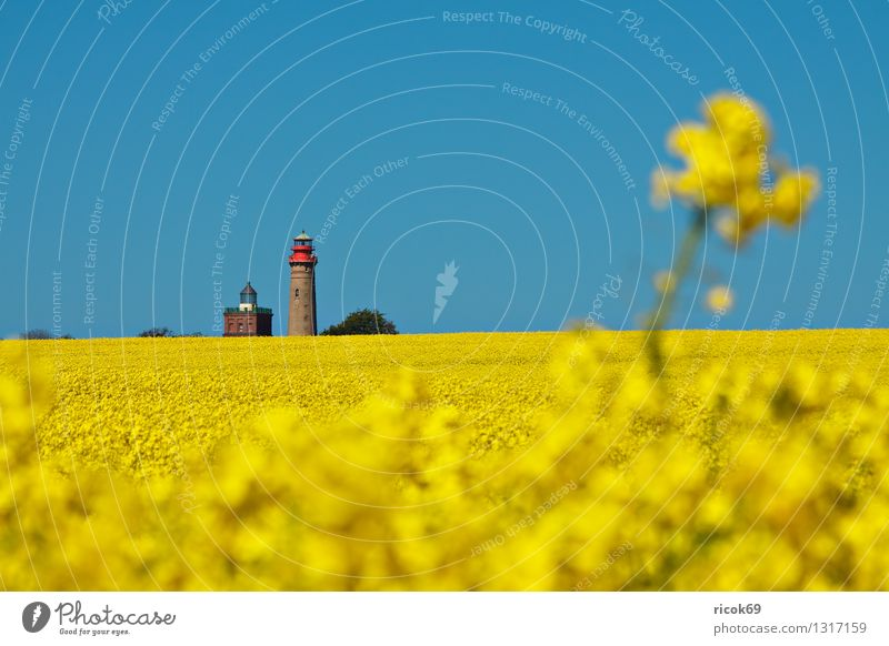 Rapeseed and lighthouses Summer Agriculture Forestry Nature Landscape Cloudless sky Field Lighthouse Tourist Attraction Landmark Blue Yellow Vacation & Travel