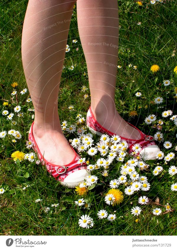 Carpet made by nature Footwear Red Green Daisy Dandelion Meadow Beautiful Beautiful weather Flower Carpet of flowers Flower power Hippie Stand Going Calf Firm