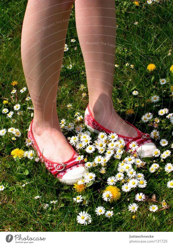 Woman Beautiful Flower Green Red Summer Joy Meadow Garden Feet Warmth Footwear Legs Going Lawn