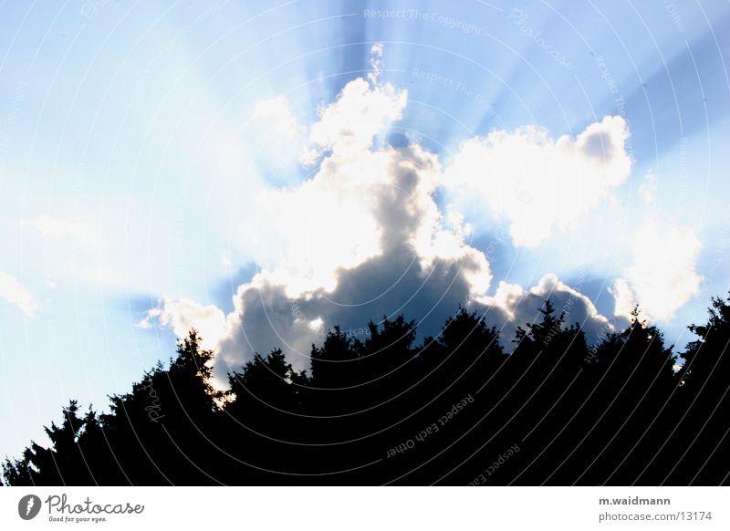 Tree Sun Summer Clouds Forest Lighting Breach