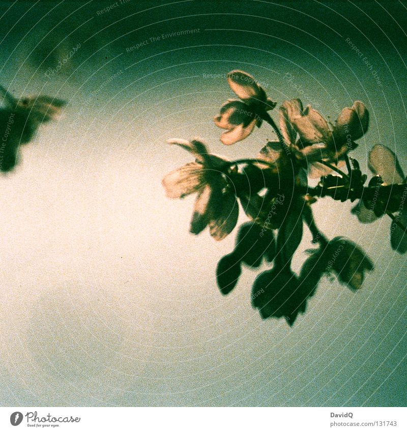 Tree Blossom Spring Fresh Branch Transience Delicate Blossoming Seasons Twig Bud Graceful Wake up