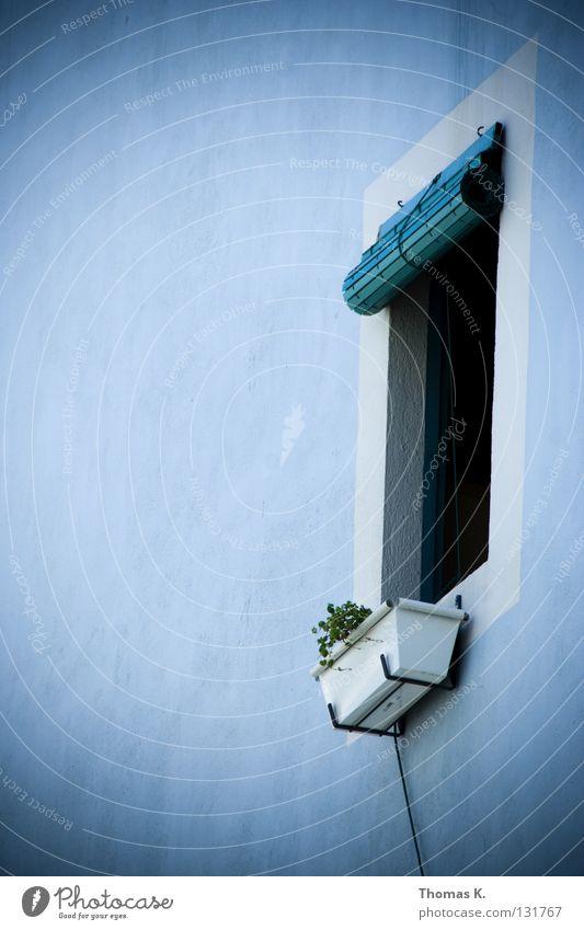 White Flower Blue Plant Loneliness Window Wall (barrier) Cable Italy Spain Plaster Greece Mediterranean Shutter Window board Roller blind
